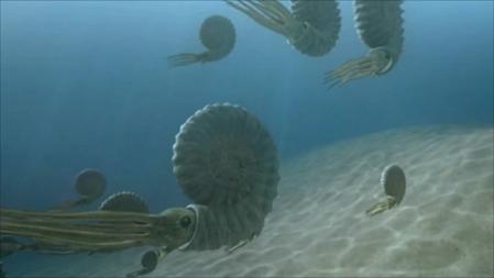 Ammonites-01